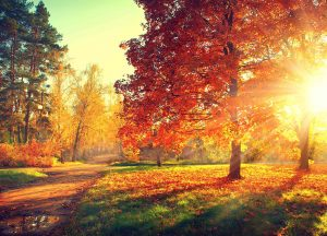 autumn with tips